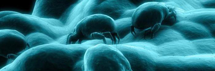 аллергия на клеща домашней пыли фото