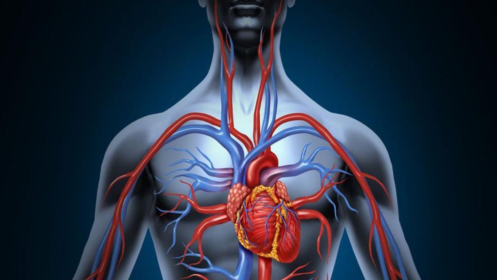 Картинка тело и сердце