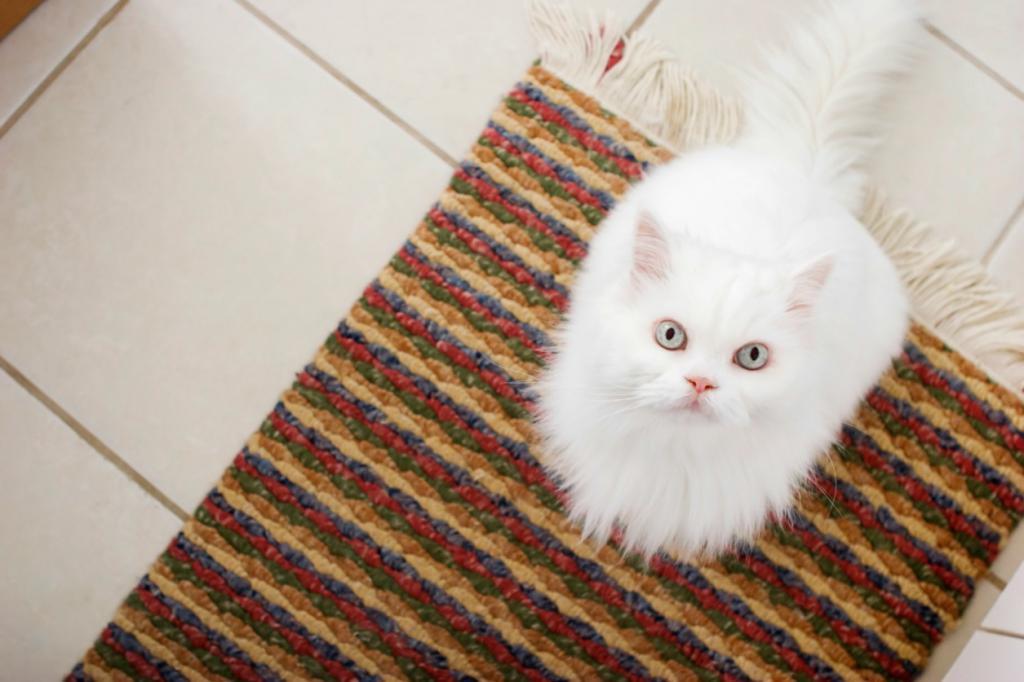 Как вывести запах кошачьей мочи: чистящие средства и народные рецепты
