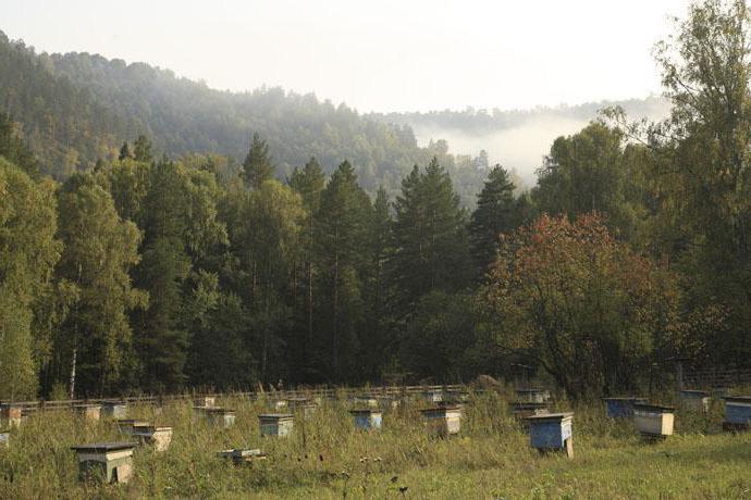 развитие пчеловодства в татарстане