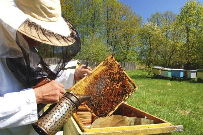 пчеловодство в татарстане особенности