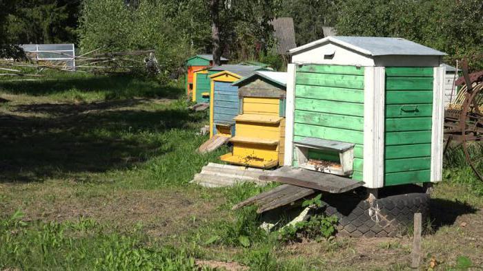 пчеловодство в татарстане история