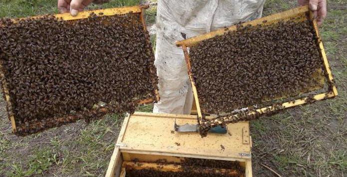 пчеловодство татарстана