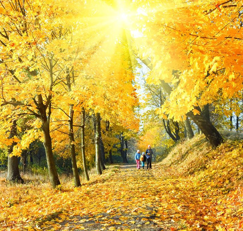 Когда заканчивается листопад у липы? Когда опадают листья у липы?