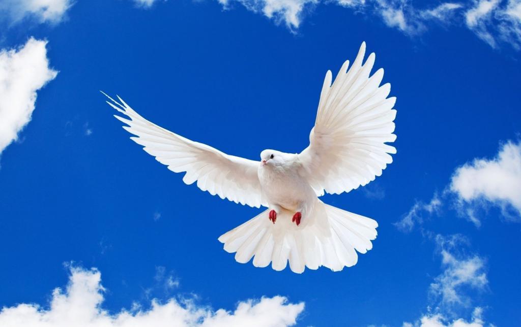 примета голубь