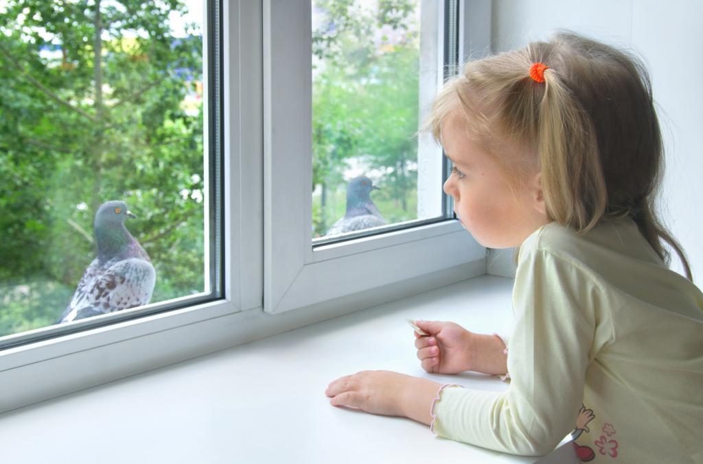 толкование приметы о голубе