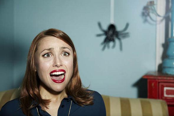 что предвещает паук