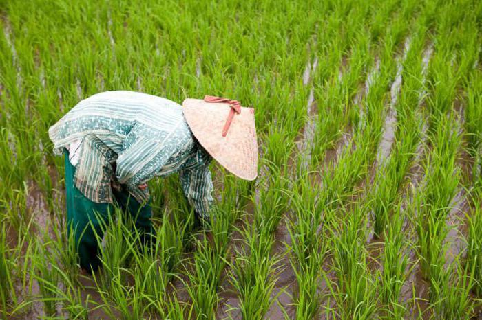 рис состав химический