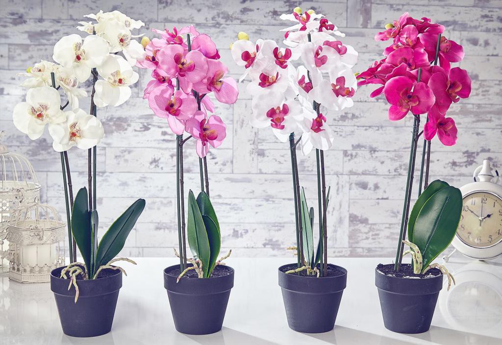 Купить комнатные цветы в чернигове, составляющие