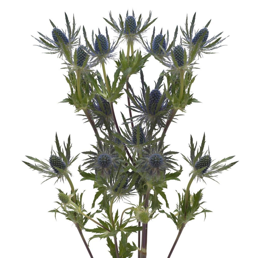 Как называется цветок с колючками