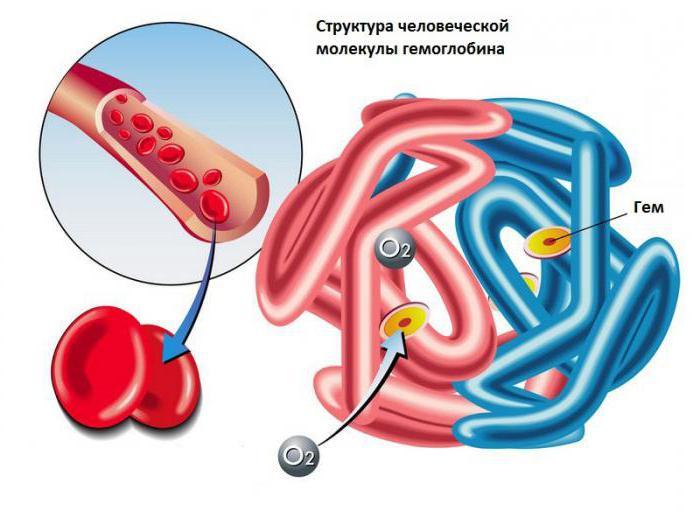 какой микроэлемент входит в состав гемоглобина эритроцитов