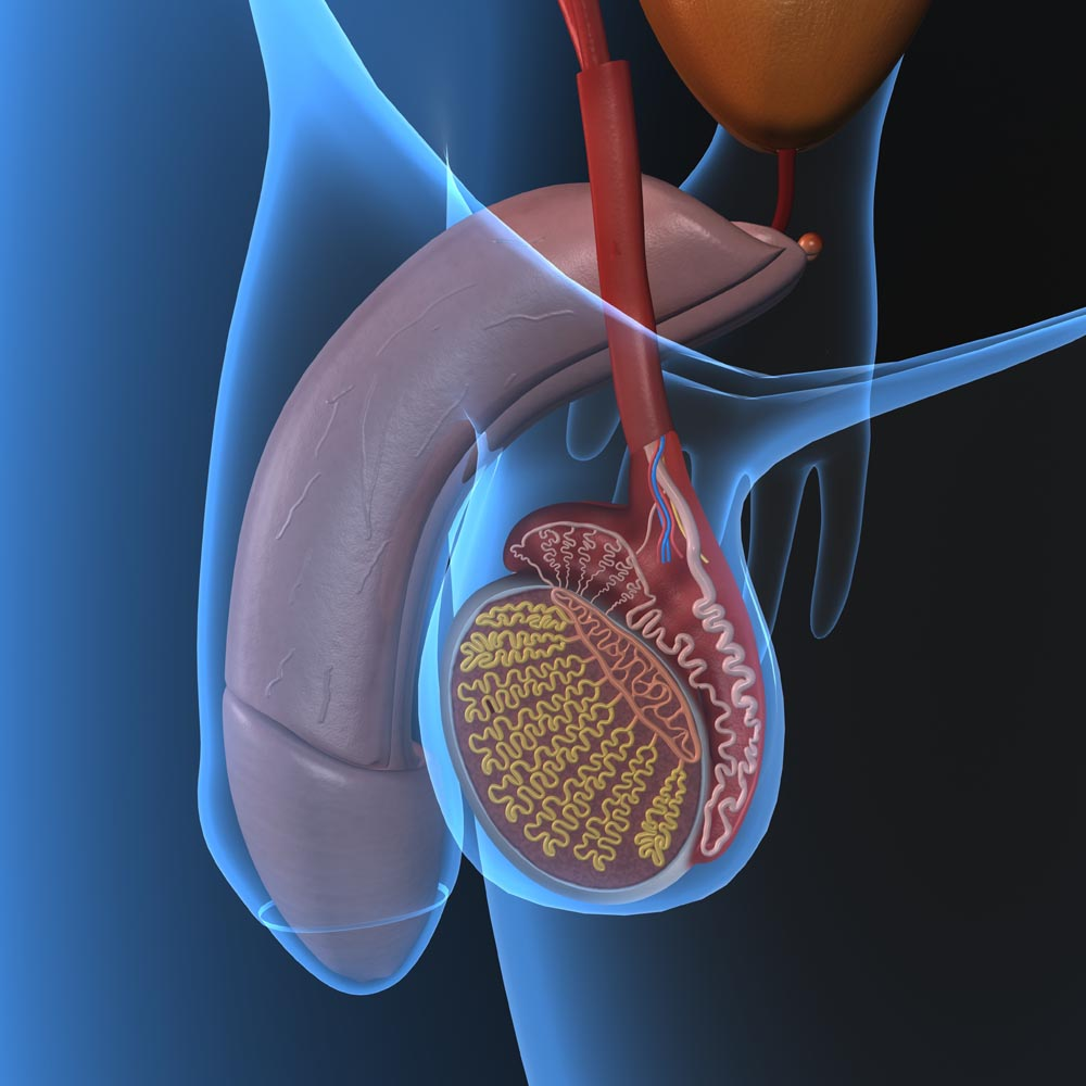Causes of prostatitis