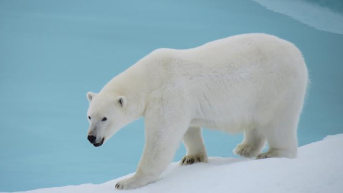 The Arctic is beautiful! How to draw a Arctic with children