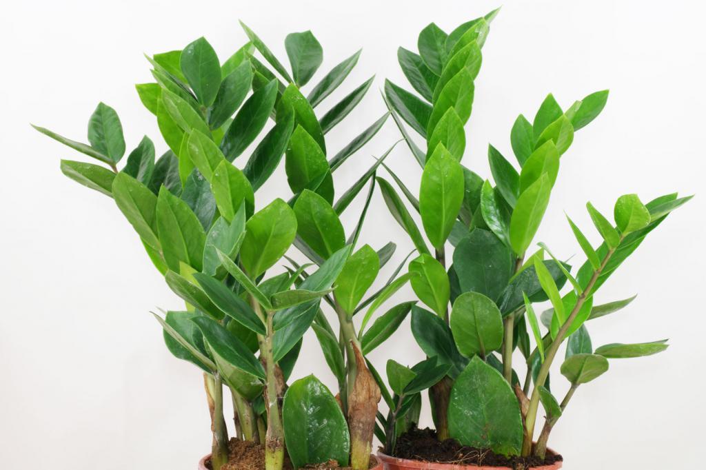 Красивое здоровое растение