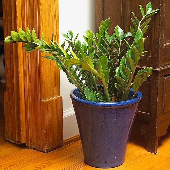 Красивое растение в синем горшке