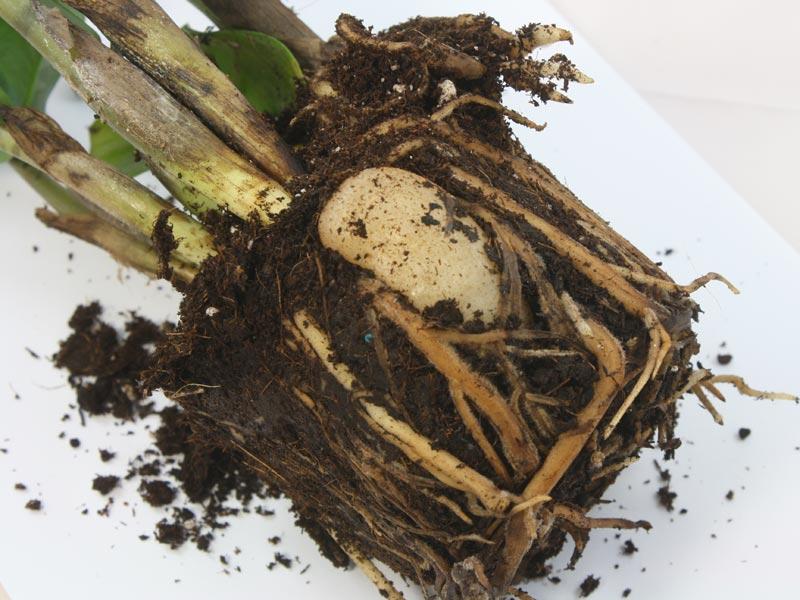 Корневая система растения