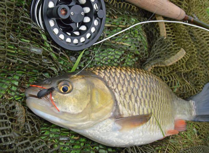 Рыбалка в Балашове на Хопре