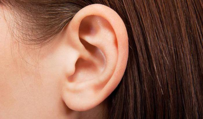 How to draw the human ear is right: recommendations for beginners