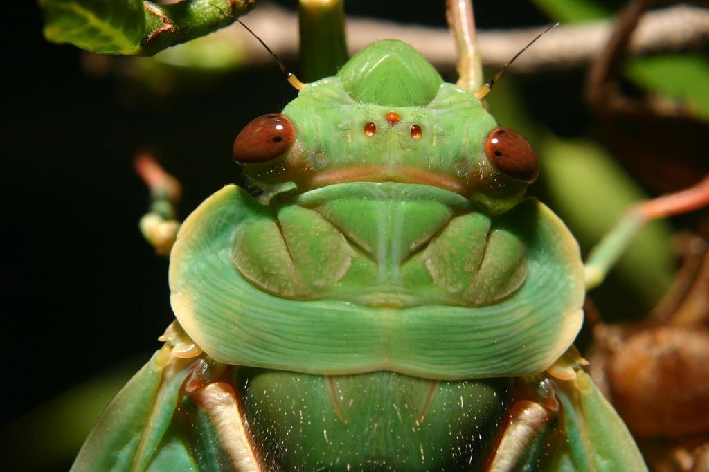 признаки насекомых