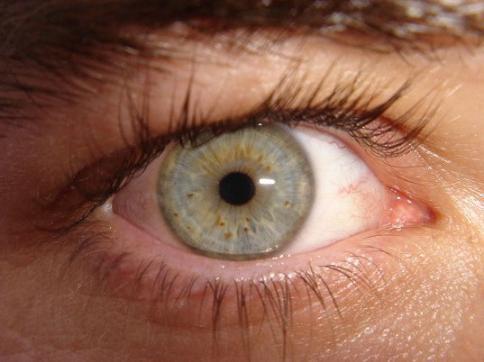 13 ноября международный день слепых
