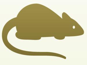 Совместимость Обезьян и Крыс