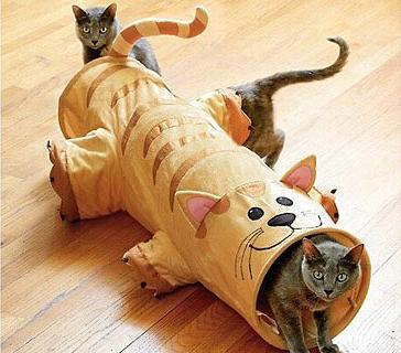 Загадка о котенке - Развлечения каждый день — …