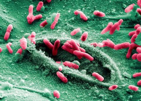 Лактозонегативные бактерии в кале