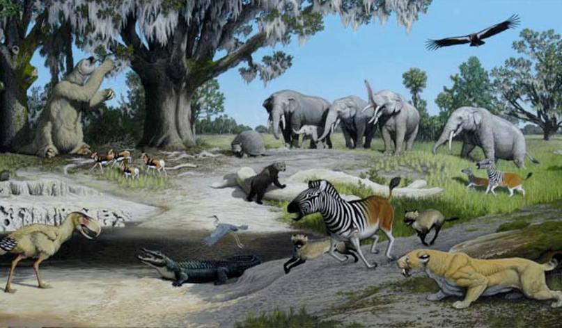 Эволюция мозга млекопитающих