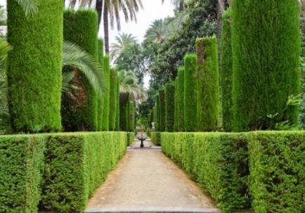 Породы деревьев для вашего участка