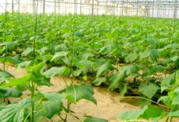 Выращивание в теплице из поликарбоната