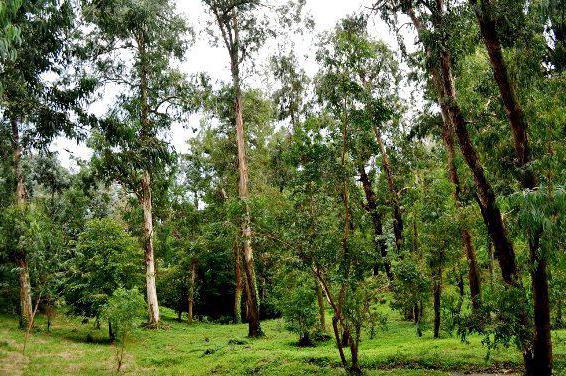 Ботанический сад Батуми адрес