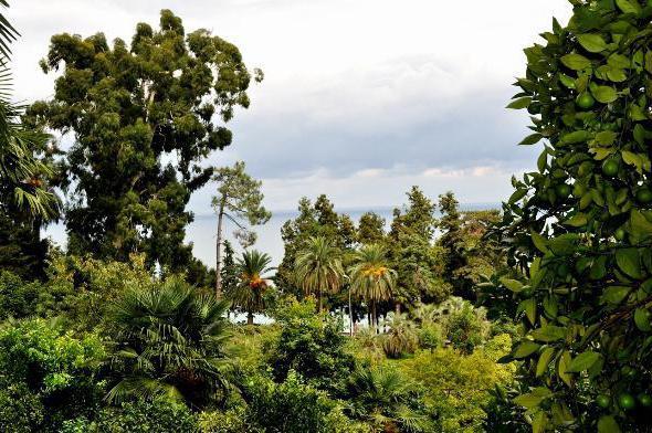 Ботанический сад Батуми как добраться