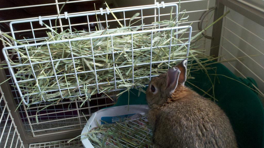 глаза попадаются кормушки сеном для кроликов фото оставить малое