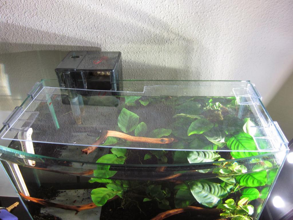 Aquarium with a glass cover