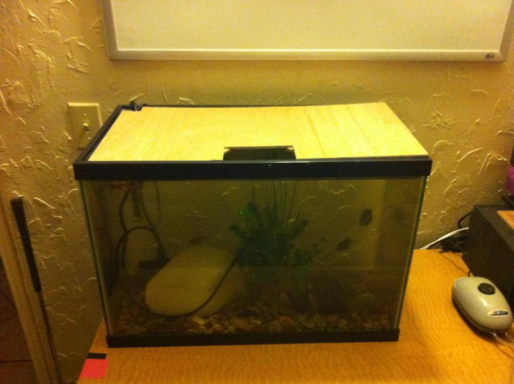Aquarium with PVC lid