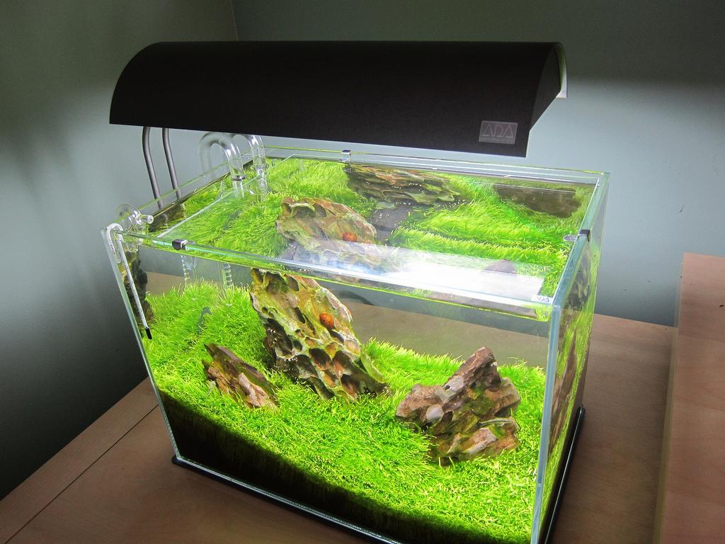 Top aquarium lighting