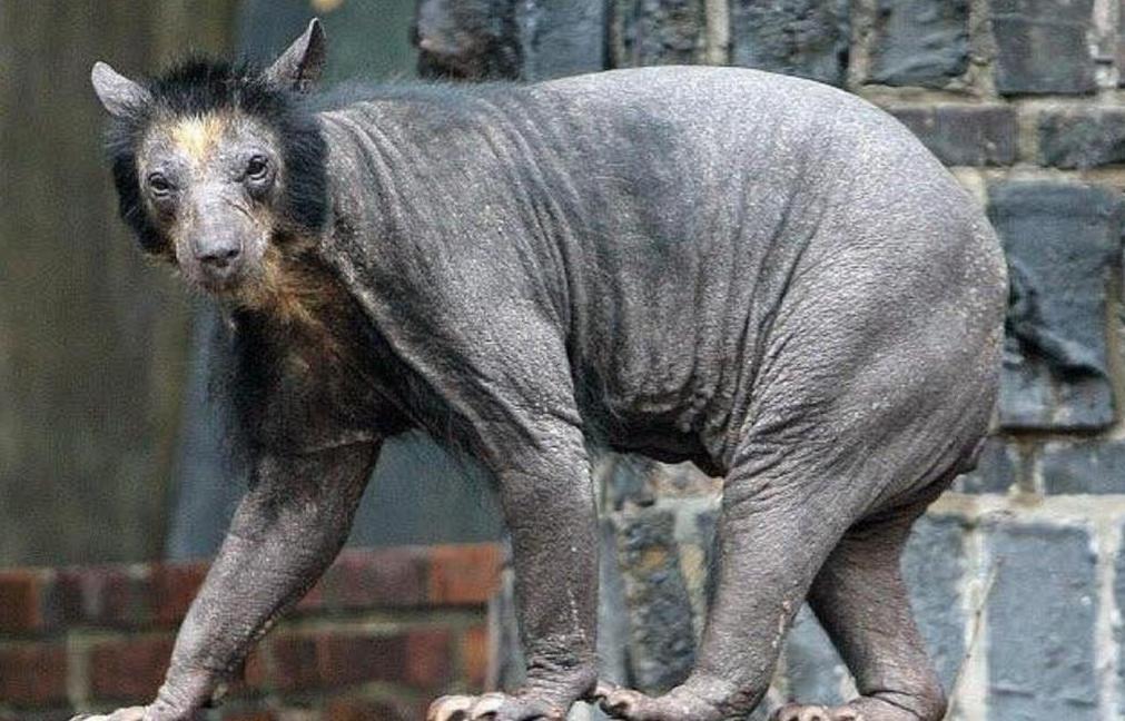 бритый волк фото отдать предпочтение