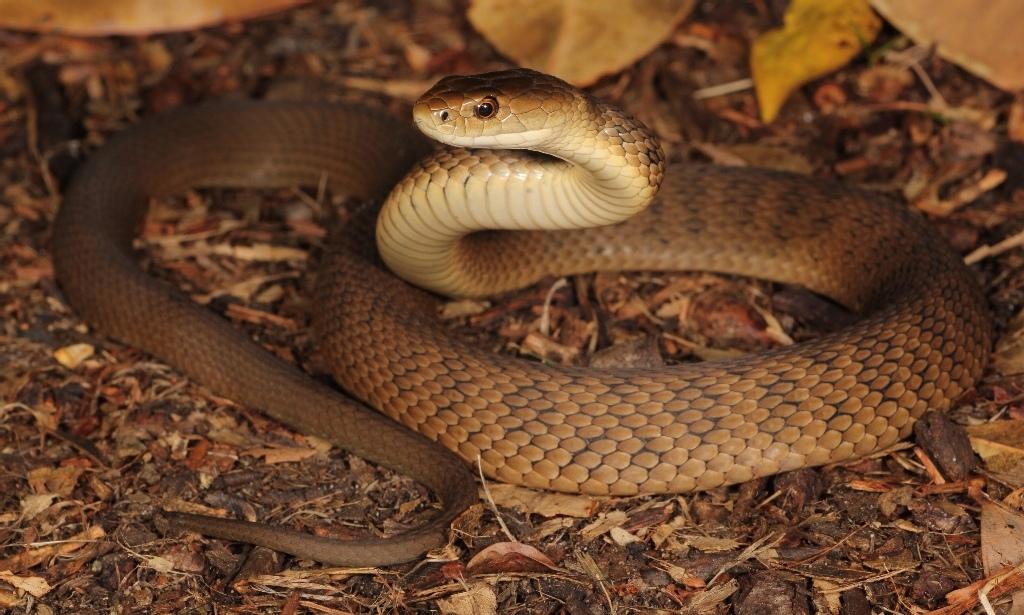 Виды змей с картинками и названиями
