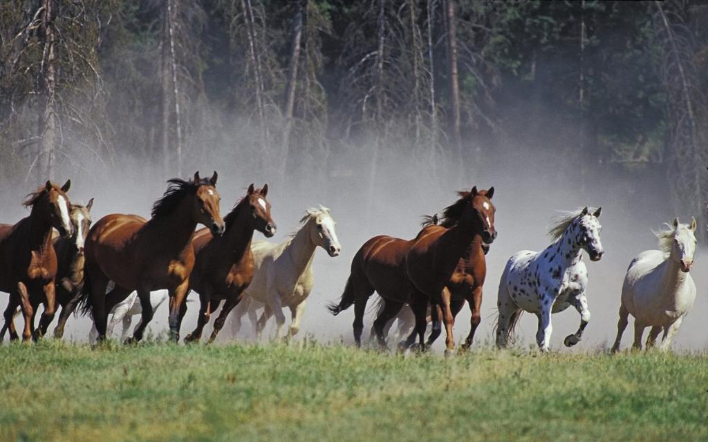 Какая температура у лошадей