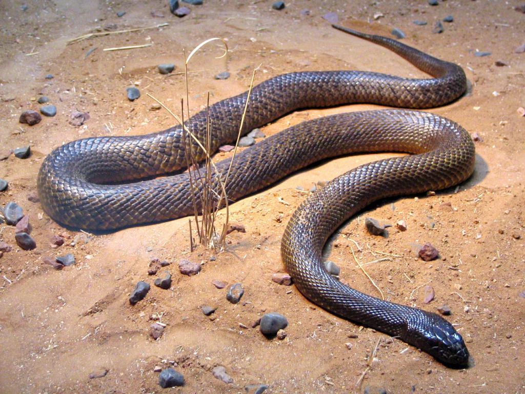 К чему беременной снится змея 1