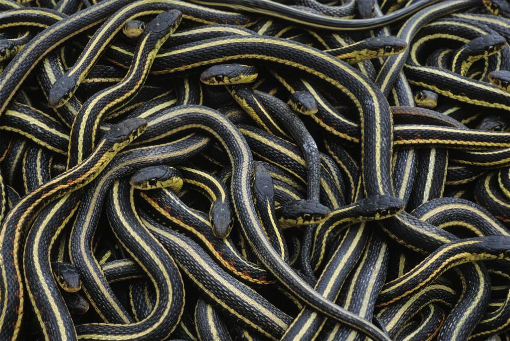 К чему беременной снится змея 14