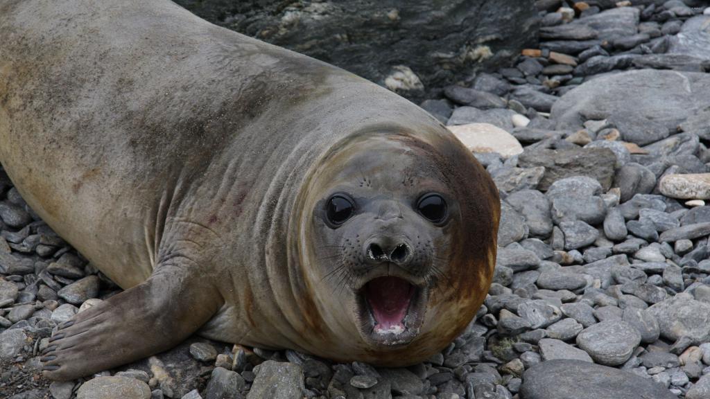 Как трактует сонник морского тюленя, который находился возле воды в вашем сновидении?