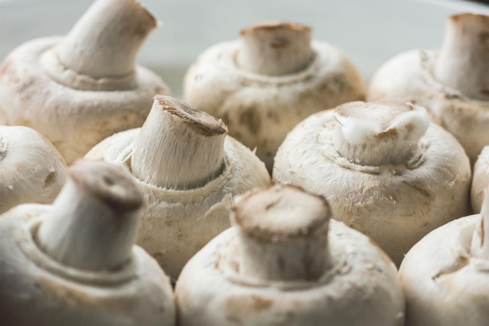 Выбор грибов