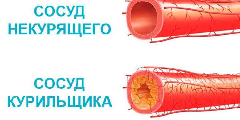 Нутро кровеносного сосуда