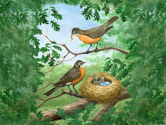 Птицы гнезда картинки для детей