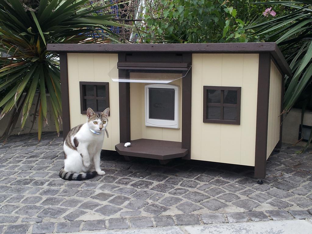 классики сторону уличный домик для кошек фото однажды решила повестись