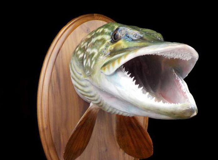 чучело из рыбы своими руками