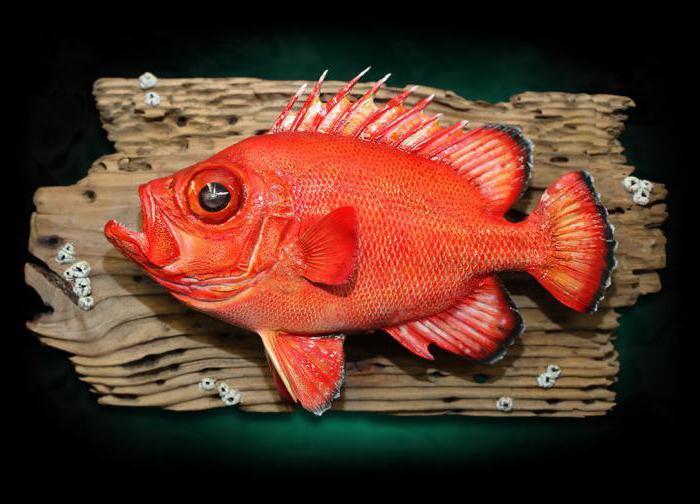 чучела голов рыб