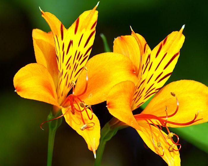 цветы из ниток и клея своими руками