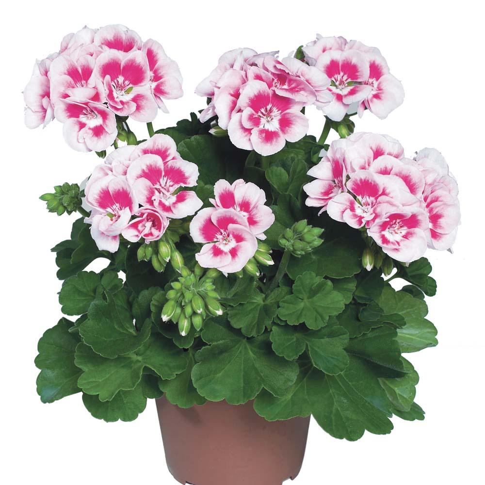 Картинки домашние цветы для детей, поздравления